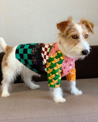 犬服シャツ